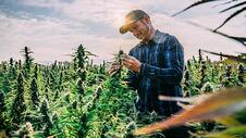 Where to Start in the CBD Market: Hemp Processing Services